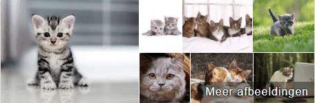 Katten afbeelding